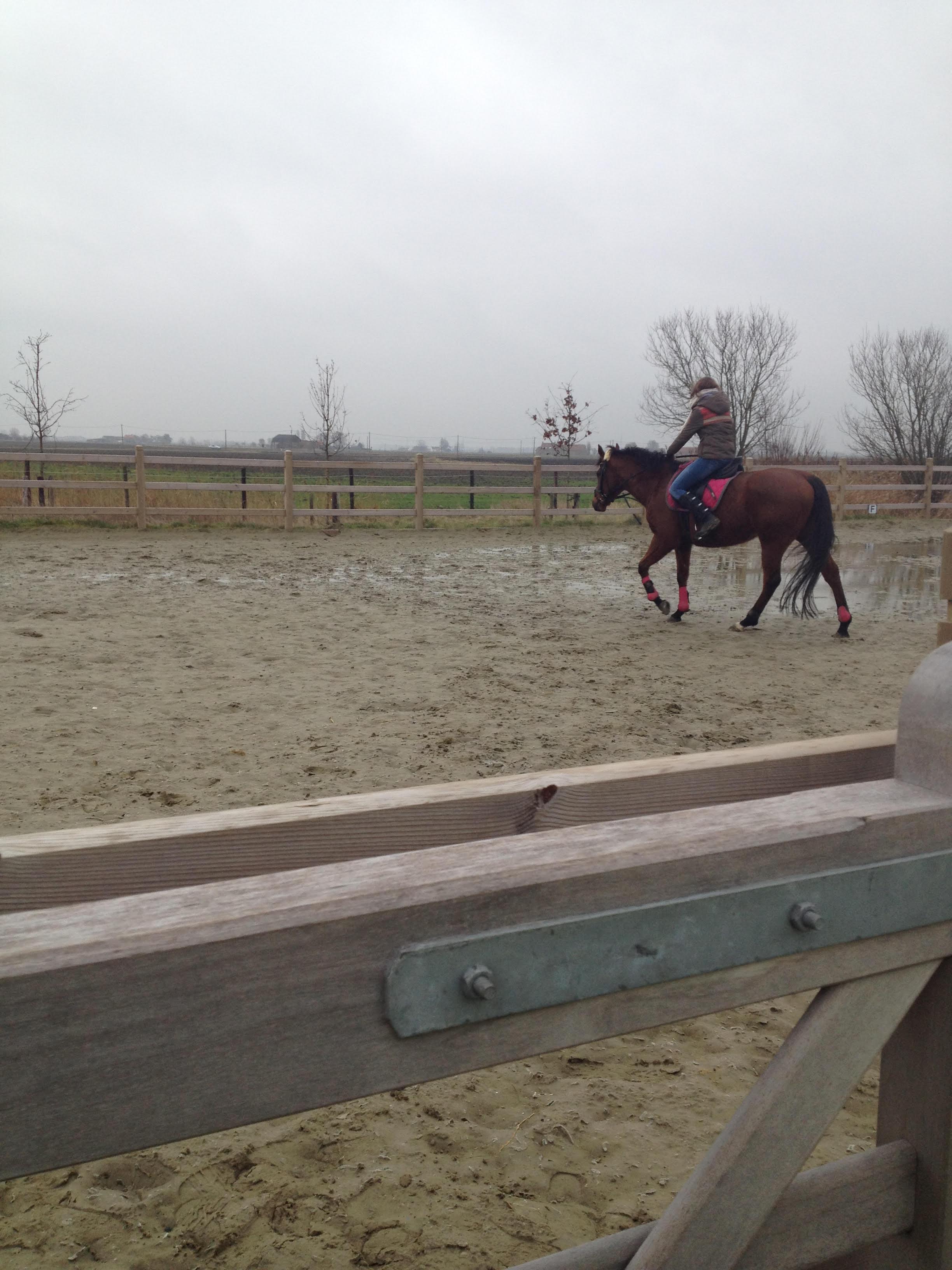 Paardrijden21